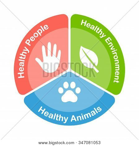 One Health Infographic Diagram. Three Sectors With Icons Of Global Health Areas: Healthy People, Ani