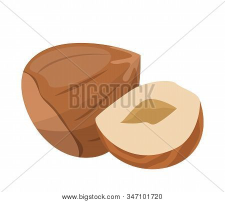 Hazelnut Vector Isolated. Organic Food, Natural Nutrition
