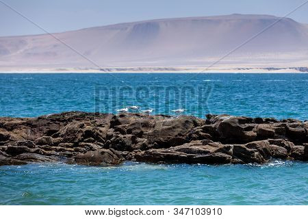 Seagulls On A Rock In The Ocean With Mountain Views, Paracas National Reserve, Peru