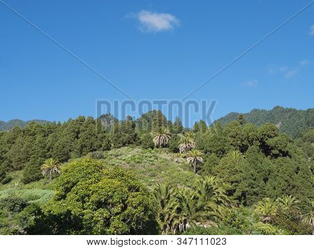Lush Green Hills With Subtropical Vegetation, Palm And Pine Trees. Beautiful Mountain Landscape Arou