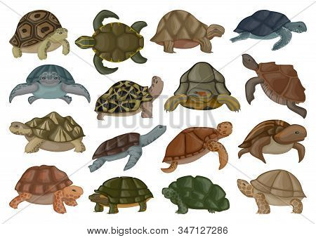 Sea Turtle Vector Illustration On White Background .tortoise Of Animal Vector Cartoon Set Icon. Isol