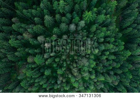 Texture Of Forest View From Above, Aerial Top View Forest, Panoramic Photo Over The Tops Of Pine For