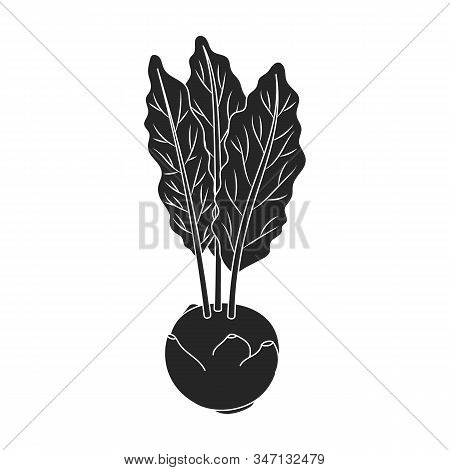 Cabbage Of Kohlrabi Vector Icon.black, Simple Vector Icon Isolated On White Background Cabbage Of Ko