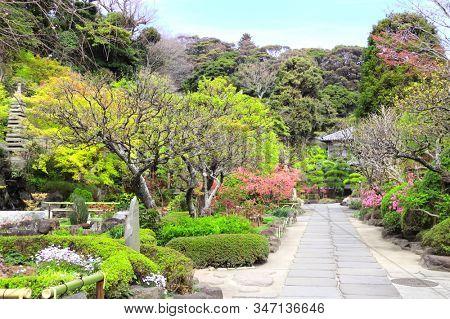 Footpath in traditional japanese ornamental garden of Hasedera temple. Spring time in Kamakura, Japan