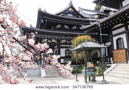 Ancient pavilion, incense pot in Hasedera (Hase-dera) temple and sakura blossom branches. Sakura blossom season in Kamakura, Kanagawa prefecture, Japan