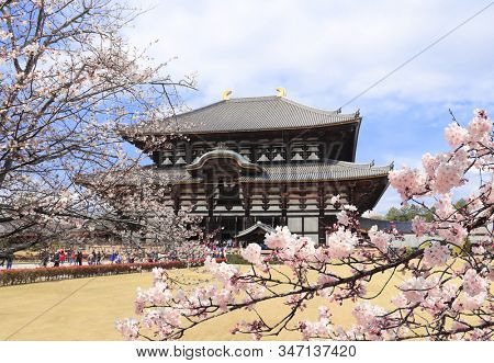 Todaiji Temple (Great Eastern Temple), one of the powerful Seven Great Temple, Nara, Japan. UNESCO world heritage site. Spring time in Japan. Sakura blossoming season
