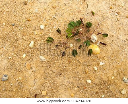 Small Plant Grow On Ground With Space