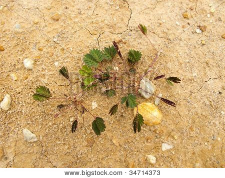 Small Plant On Dry Ground