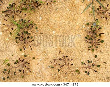 Small Plant Grow On Ground