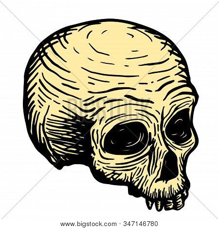 Hand Drawing Of A Skull Of A Dead Man, Black On A White Background. Vector Illustration
