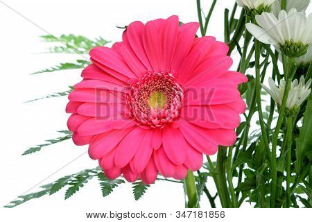 A Pink Gerbera Flower And White Daisy Isolated On White