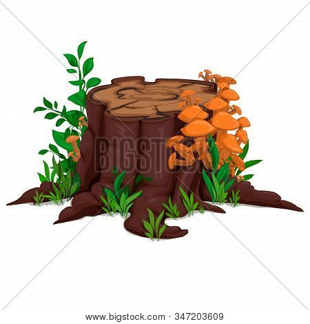 Drawn Stump With Mushrooms And Grass, Vector. Isolated Illustration. Honey, Stump, Grass