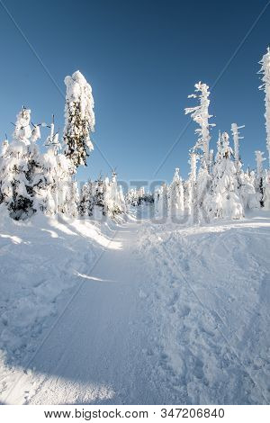 Snow Covered Hiking Trail With Frozen Trees Around And Clear Sky Bellow Lysa Hora Hill In Moravskosl