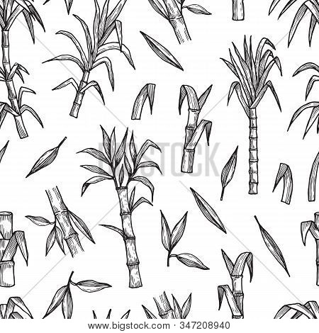 Sugar Plant Seamless Pattern. Hand Drawn Sugarcane Vector Background. Agriculture Production Sketch