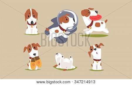 Cute Beagle Dog Cartoon Character Collection, Funny Purebred Pet Animal In Different Situations Vect