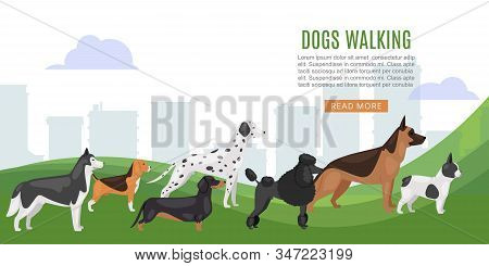 Walking Dog Service Web Baner Vector Illustration. Big Size Dogs And Home Pets. Happy And Friendly D