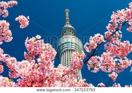 Tokyo, Japan - March 13: Spring In Tokyo. The Famous Tokyo Skytree Towering Above Cherry Pink Blosso