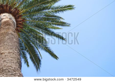 Close Up Of A Palm Tree In A Blue Sky