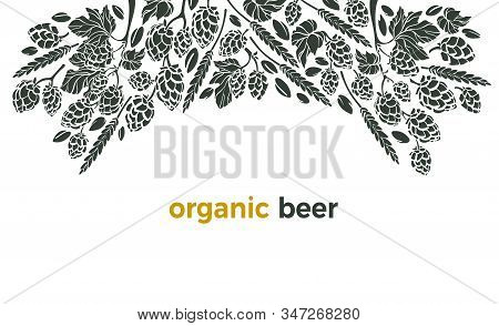 Vector Beer Ingredient Of Twig Of Hop, Wheat Grain. Pattern With Hand Drawn Graphic Illustration, Bo