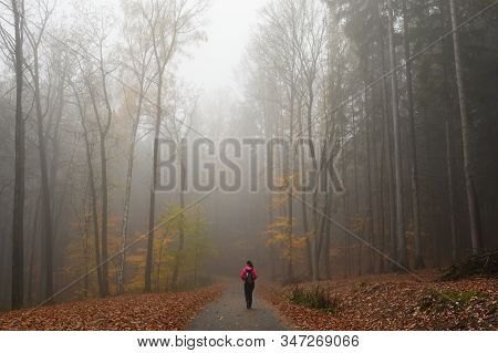 Hiking In The Autumn Region Of The Bohemian Paradise