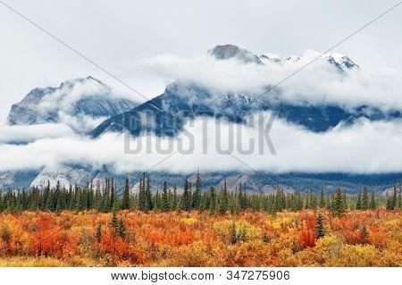 Beautiful Autumn foliage in Jasper National Park in Canada