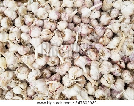 Garlic, Fresh Garlic - Red Garlic, Garlic Group Background, Garlic Cloves Background