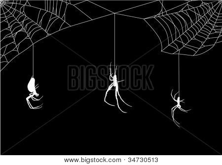 illustration with spider web isolated on black background