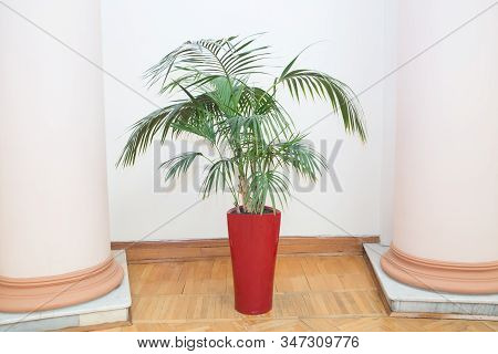 Decorative Areca Palm In A Red Pot . Decorative Areca Palm In Interior Of Room . Indoor Flower Pots