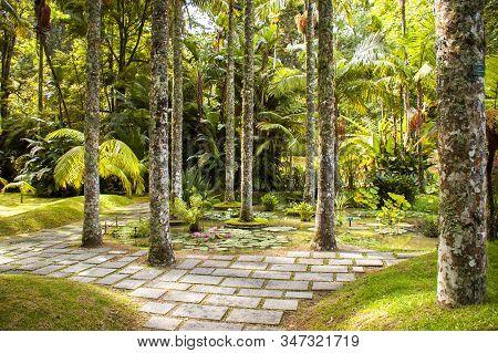 View Of The Terra Nostra Garden, Furnas, Sao Miguel, Azores, Portugal
