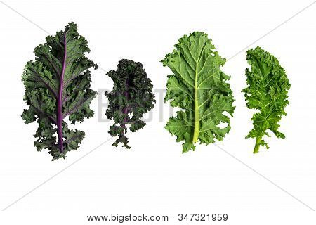 Green Leafy Kale