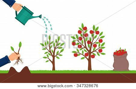 Growth Of Apple Tree And Harvesting. Hand Plants A Sapling Of Fruit Tree. Cultivation Process Of Fru
