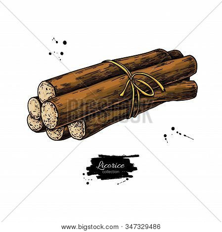 Licorice Root Bunch. Vector Drawing. Botanical Illustration
