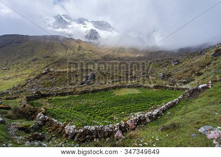 Salkantay Trek In The Way To Machu Picchu, Small Field Of Potatoes,  Cuzco Area In Peru