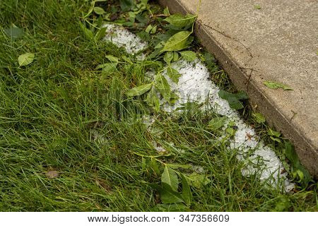 Hail Stones In Green Grass After Hail Storm