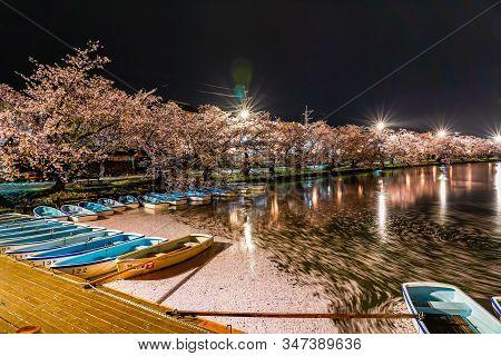 Aomori Prefecture, Tohoku Region, Japan - April 26, 2019 : Hirosaki Park Cherry Blossom Trees Matsur