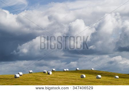 White Plastic Silage Wrapped Bales With Hay On Green Grass Hill In Iceland. Farming In Scandinavia,