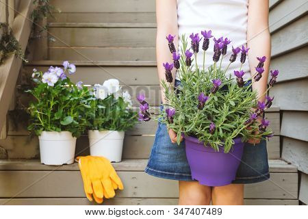 Girl Holding Lavender Pot At The Backyard Stairs With White Viola Plants. Child Family Gardening Con