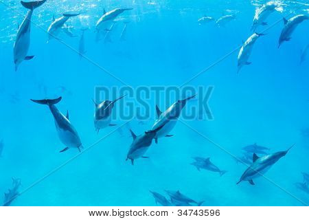 Dolphins Swimming in the Ocean, Amazing Underwater View