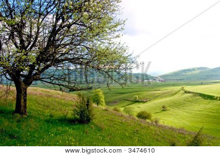 Spring Landscape With Pieces Of Cultivated Farmland And Trees