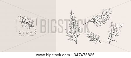 Cedar Logo And Branch. Hand Drawn Wedding Herb, Plant And Monogram With Elegant Leaves For Invitatio