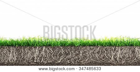 Grass And Turf Soil With Roots Isolated