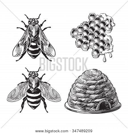 Set Of Bee, Wasp, Honeycombs And Hive Vintage Monochrome Drawing, Engraving Graphic, Apiary Hand Dra