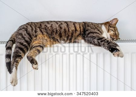 Homeless Tabby Cat Warming Up On The Heating Battery By The Wall In A Room. Tabby Cat Sleeping On A
