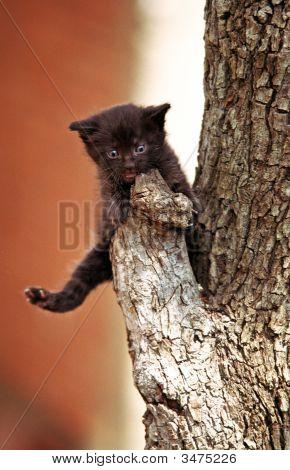 Little Black Kitten On A Branch Of A Tree