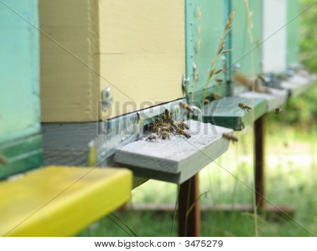 Macro Of Beehive Entrance With Busy Bees In Front