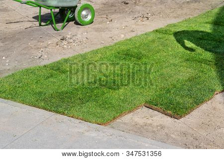 Professional Gardener Worker Laying Fresh Artificially Grown Rolled Lawn. Detail Process Of Installa