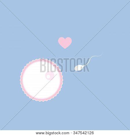 Fertility Reproduction Of Ovum And Spermatozoon Vector Illustration Eps10