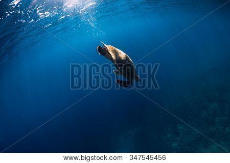 Green Sea Turtle Swimming In Deep Sea