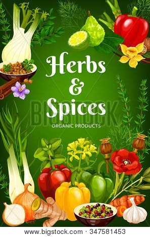 Cooking , Seasonings And Herbs Vector Poster. Bell Pepper, Garlic And Rosemary, Food Poppy Seeds, Va