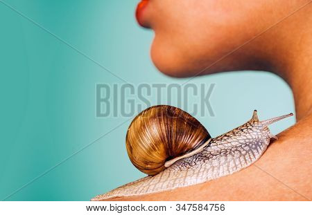 Skin Care. Massage With Snail. Skincare Repairing. Healing Mucus. Having Fun With Adorable Snail. Sp